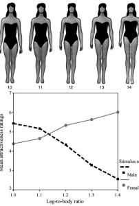 согласно теории Френсиса Палмера для женщин идеальное соотношение тела к ногам  от 35/65 до 40/60